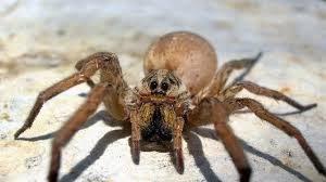 scaryspider